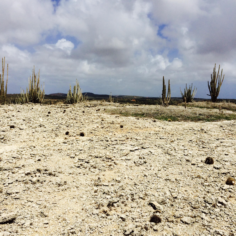 de zes hiking trails op Bonaire