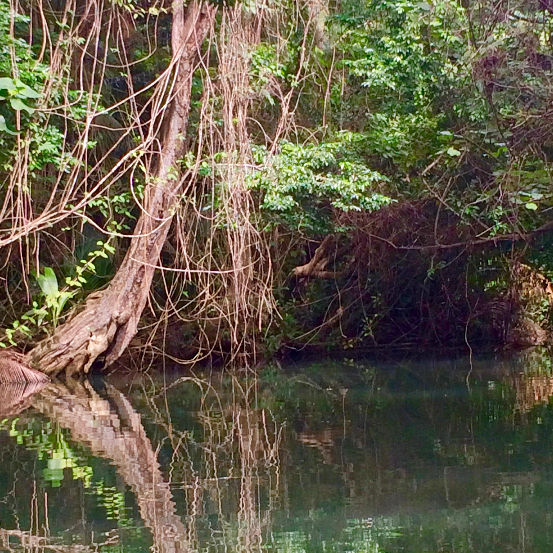 met een roeibootje op de indian river