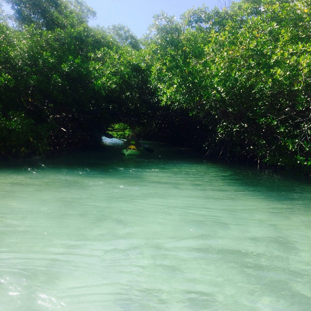 Kajakken en snorkelen mangrove Bonaire