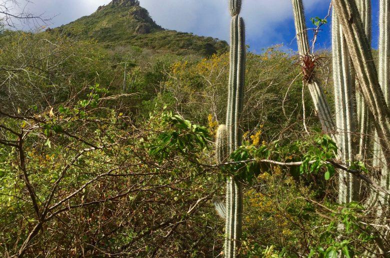 doen op curacao: de christoffelberg beklimmen