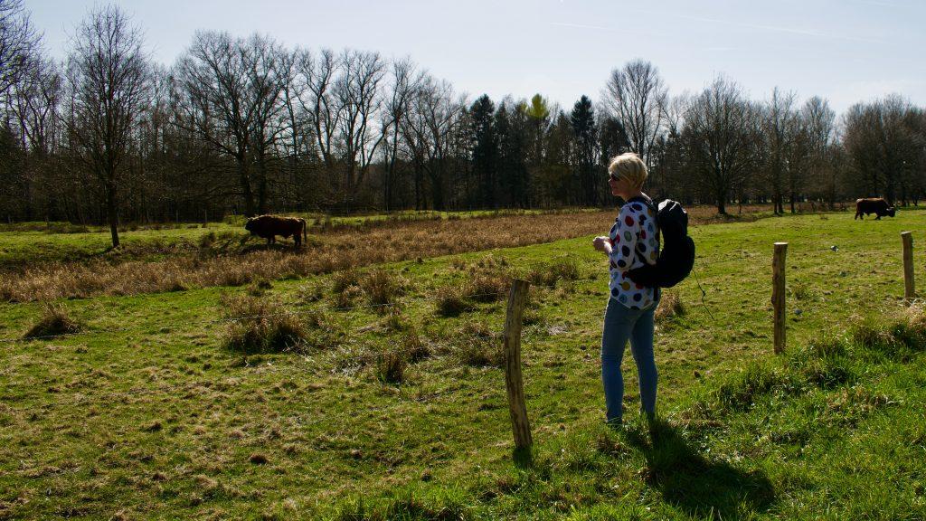 Wandelen in de Schinveldse bossen