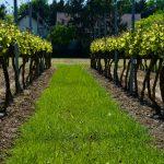 wijn proeven in het smalste stukje Nederland