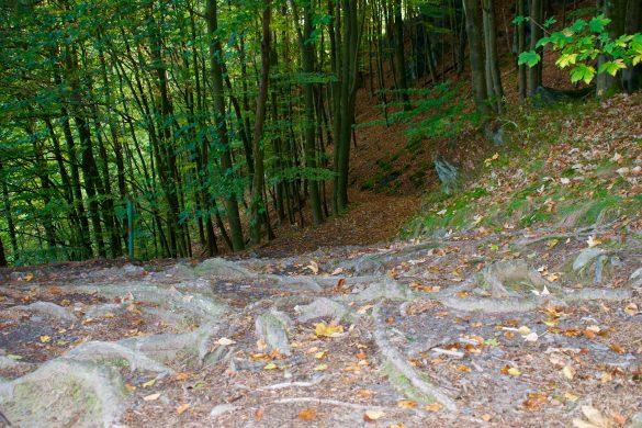 Wandelen over de Eifelsteig