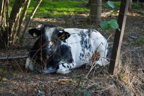 ommetje het ijzerenbos