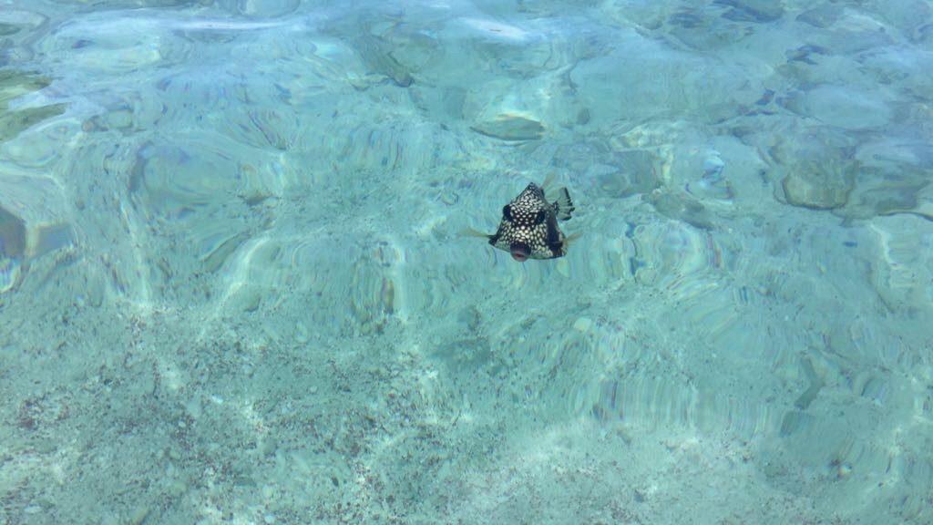Mooiste snorkelplekjes Bonaire