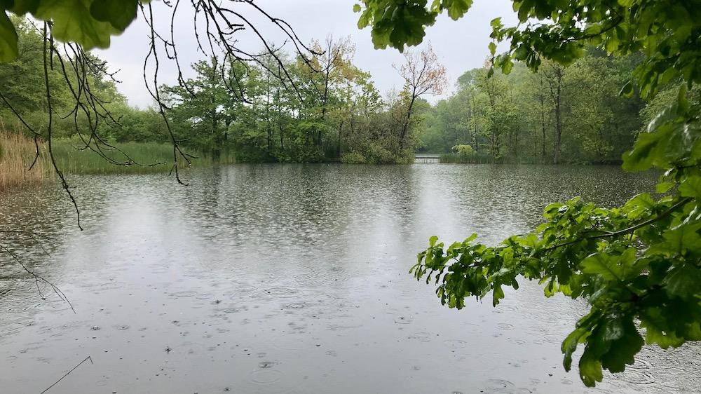 Natuurgebied De Doort